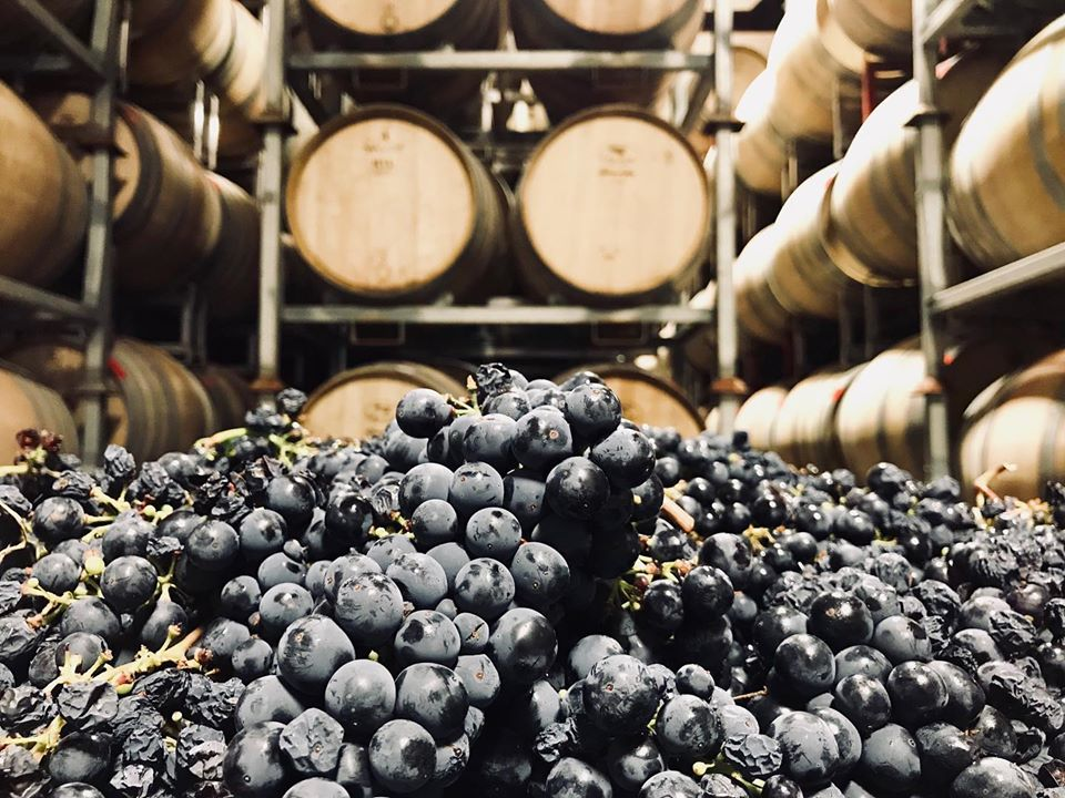 Vintegrity Named Missouri Distributor for Turley Wine