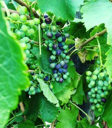 Vine Street Imports: Earthminded Wine Consumption